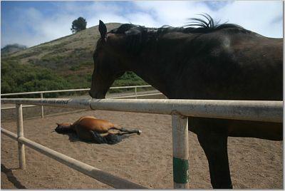horseplayingdead