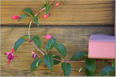 Pinkflowersonwall